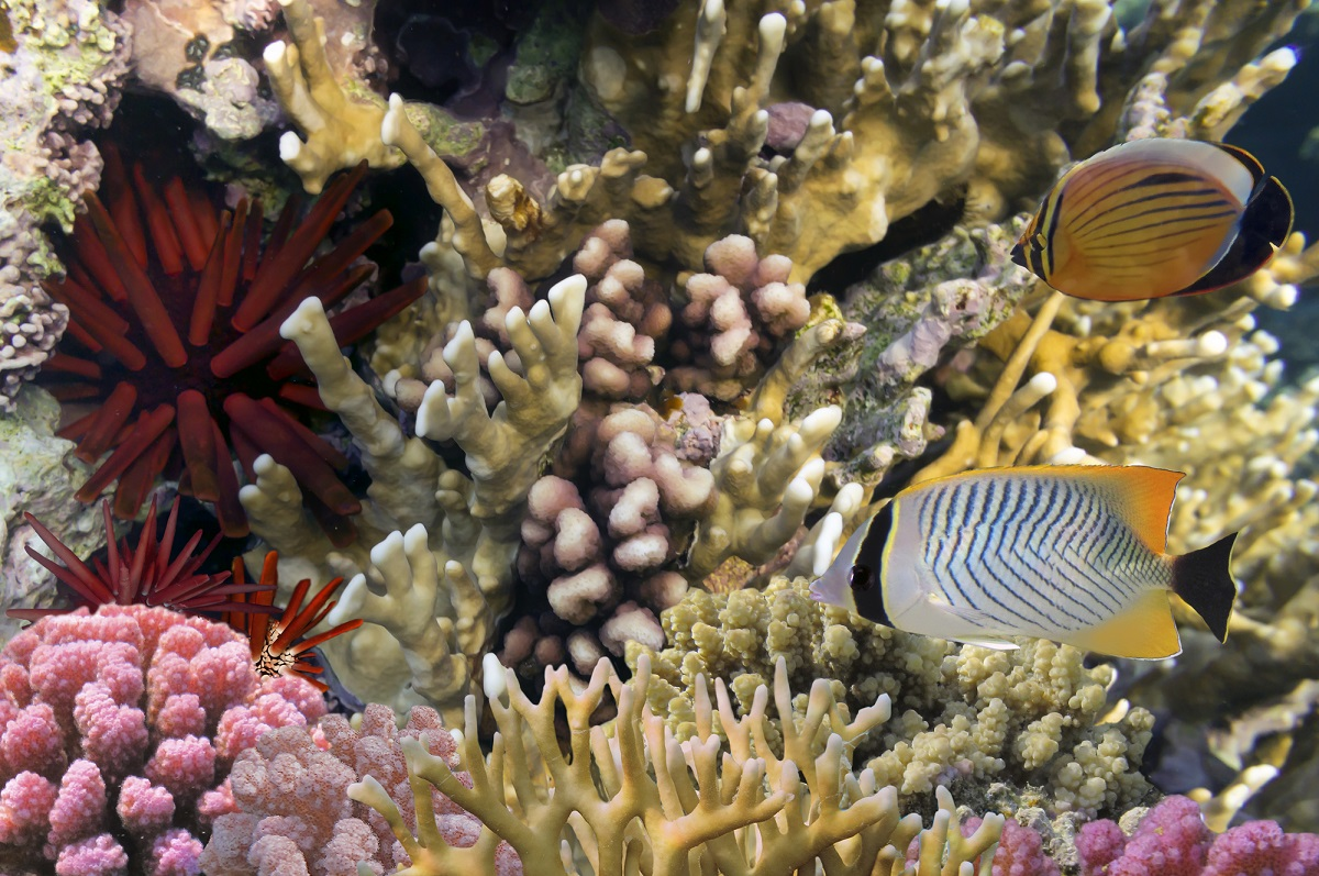 10 animals with longer lifespans than humans for Koi fish life span